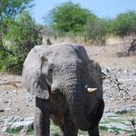 象の泥浴び。水滴まできれいに写っています。