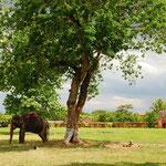 神の使い、象はここにも。