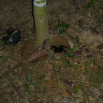 夜。キャンプの傍でタランチュラを見ました。のりのり撮影。遠すぎてフラッシュが効いていません。