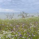 Landschaft auf Rügen, Foto: Rita Fortmeier