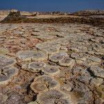 Dans la dépression désertique du Danakil au nord est de l Ethiopie