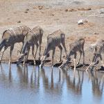 Oryx Antilopen in Reih und Glied