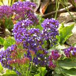 Aufgrund der klimatischen Besonderheiten gibt es zahlreiche bekannte Gärten mit subtropischen Pflanzen.