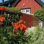 Impression von Sandhamn.