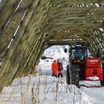Arbeiter welche die Dorsch Fische an die Holzgestelle hängen