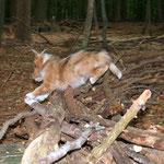NEIN! Kein Fuchs, sondern Malou!