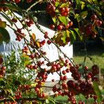 les yourtes en automne