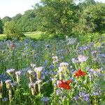 jardin à la ferme des ânes : les abeilles