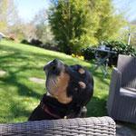 Ilton, le chien de la ferme