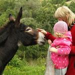 des balades avec les ânes pendant vos vacances