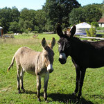 activités avec les ânes pendant vos vacances en yourte