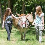 une balade avec un âne