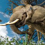 """""""Leviathan"""" - Ausstellung von Christopher Bennett -  06.07.2012 bis 27.07.2012 - Gewölbesaal"""