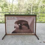 Personalizada 140cm 3 pájaros.