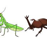 リアル昆虫1