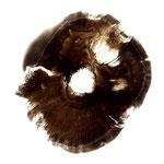Pilze I  , 126x126 cm , 2001