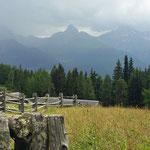 Wiesner Alp, Blick gegen Tinzenhorn