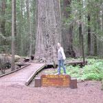 Founder's Tree, Redwood National Park