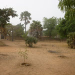 Our compound almost looks like a desert during the Harmattan. But by August, it will be overrun by corn and beans.