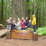 Redwood National Forest!