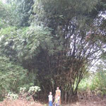 The children standing in front of bamboo