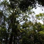 schwebend mitten durch den Regenwald, über phantastische Wasserfälle hinweg