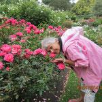 hm, riechen diese NZ-Rosen gut