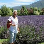 Kaikoura-Lavender Farm