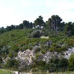 """""""Giardino roccioso naturale"""" sul Gargano"""