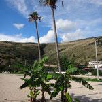 Jale, die Palmen stehen noch immer