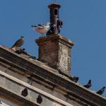 Die Dächer von Orebic