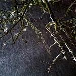 Apfelbaum bei Schneefall