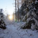 Verschneiter Waldweg in Hofnähe