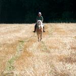 Auf unseren eigenen Feldern kein Problem: Im Galopp übers Stoppelfeld