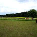 """Teil der """"Trockenkoppel"""": Viel Platz für die Pferde (2016)"""
