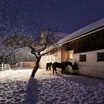 Paddock im Schnee
