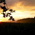 Ausreiten in Bernhardswald