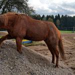Günstigerweise organisiert man vor Baubeginn den laufenden Pferdebetrieb.