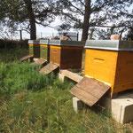 Bienenstand 2017