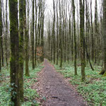 und auf Waldpfaden entlang.
