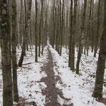 Wanderpfad in Schneelandschaft - so geradlinig und eben ging es aber nicht immer zu ...