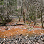 Der Urwald - sich selbst überlassene Natur pur