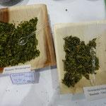 Chips auf die grüne Art: Wasabi-Weizengras und Grünkohl-Baobab-Onion