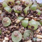 Linsen-Trauben-Salat, eine ungewöhnlich erfrischende Komination!