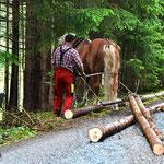 Holzrücken mit dem Pferd