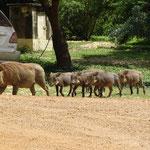Watrzenschwein Familie