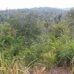 North Bali land for sale by owner