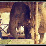 Elephant´s World in Kanchanaburi