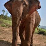 Elephant Special Tours