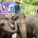 Elephant Conservation Center in Lampang